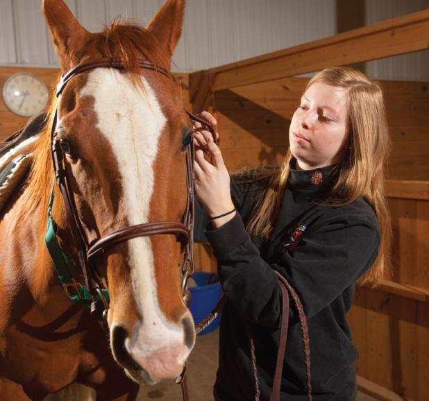 Equine Sciences